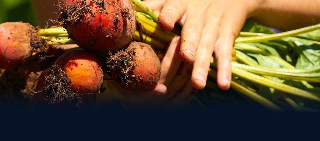 FoodWorks: Vegetables
